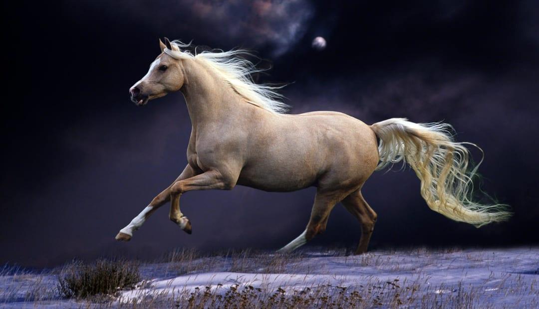 Muỗi và ngựa